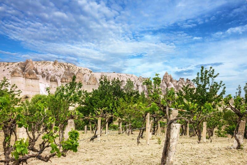 Winnicy i góry krajobraz, Cappadocia, Turcja fotografia stock