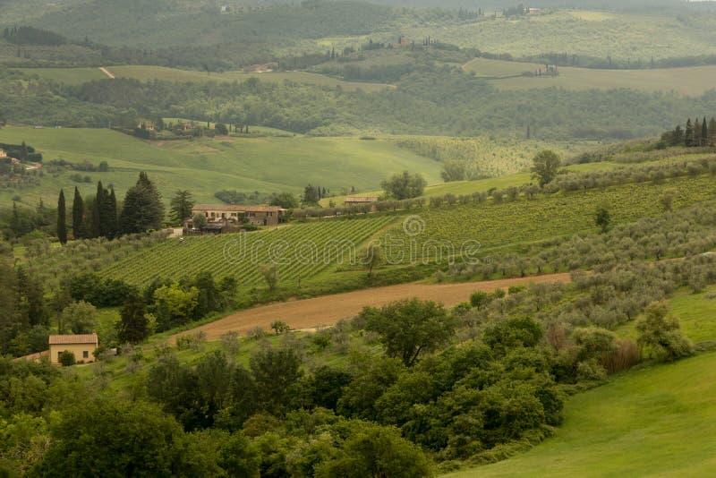 Winnicy i oliwni gaje na Toskańskim zboczu obrazy stock