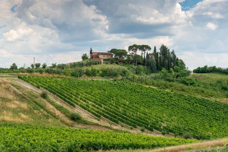 Winnicy i oliwni gaje w Włochy ` s Tuscany prowinci zdjęcia stock