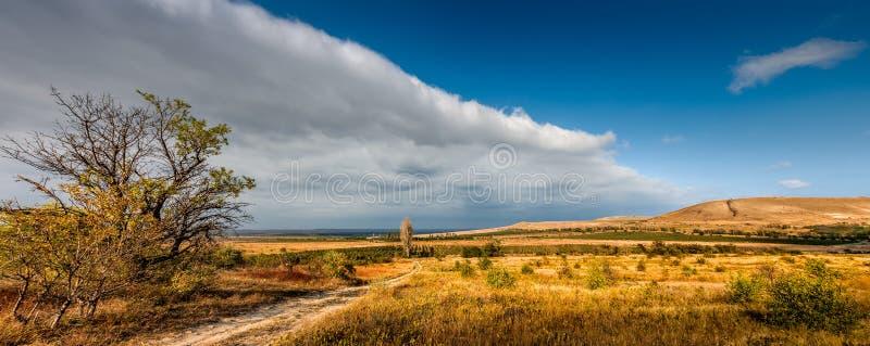 Winnicy Koktebel, Crimea zdjęcia stock
