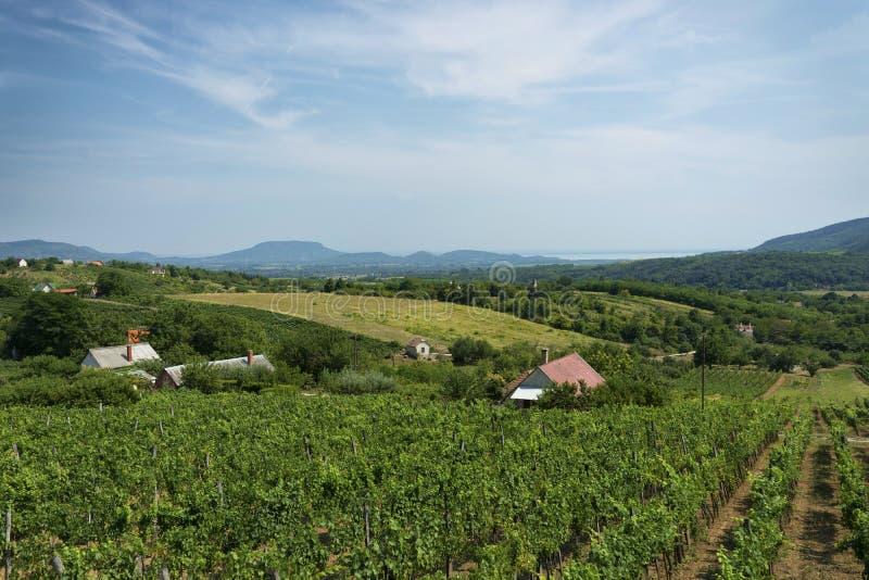 Winnicy krajobraz przy Jeziornym Balaton fotografia royalty free