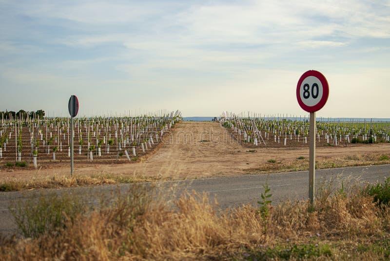 Winnicy krajobraz z systemem irygacyjnym z kapinosem woda, przy zmierzchem Raïmat wina Caberneet Sauvignon Merlot, syrah, Pynot fotografia stock