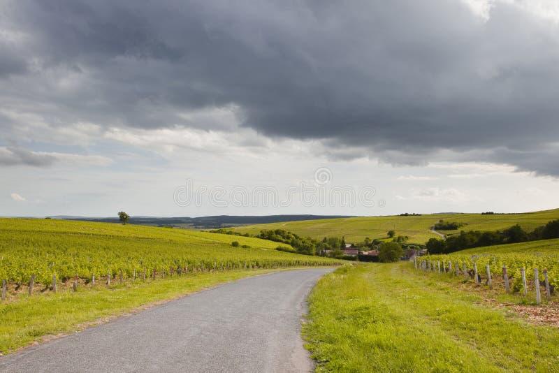 Winnicy Loire zdjęcie stock