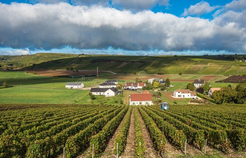 Winnicy Loire dolina, Francja obrazy stock