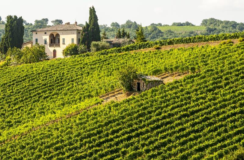 Winnicy Montalcino (Tuscany) obraz stock