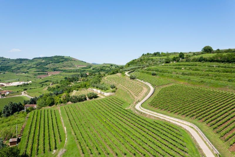 Winnicy od Soave włoskie wino zdjęcia stock
