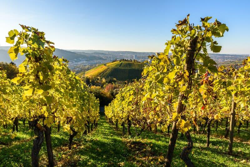 Winnicy przy Stuttgart - pi?kny wino region w po?udnie Niemcy obraz royalty free