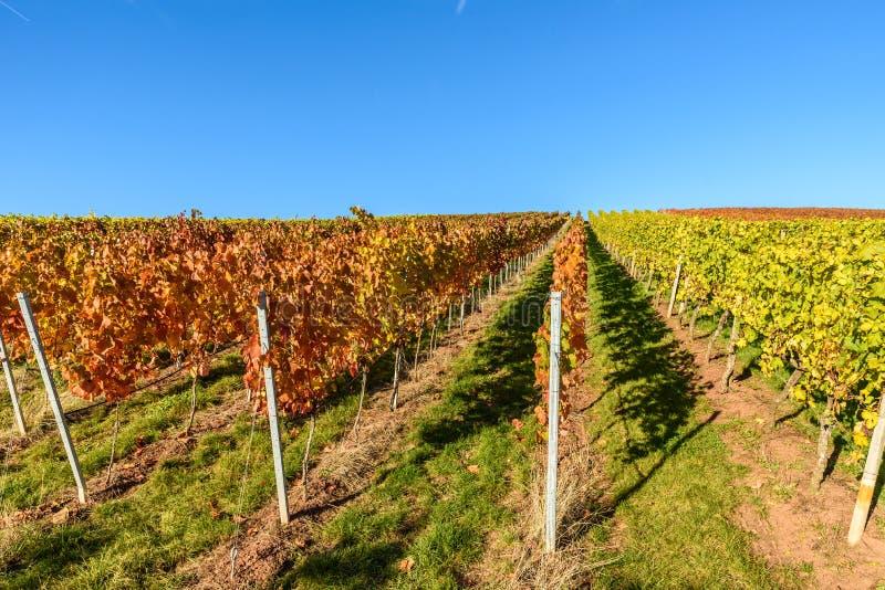Winnicy przy Stuttgart - pi?kny wino region w po?udnie Niemcy zdjęcia stock