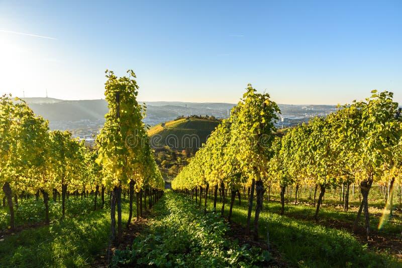 Winnicy przy Stuttgart - pi?kny wino region w po?udnie Niemcy obraz stock