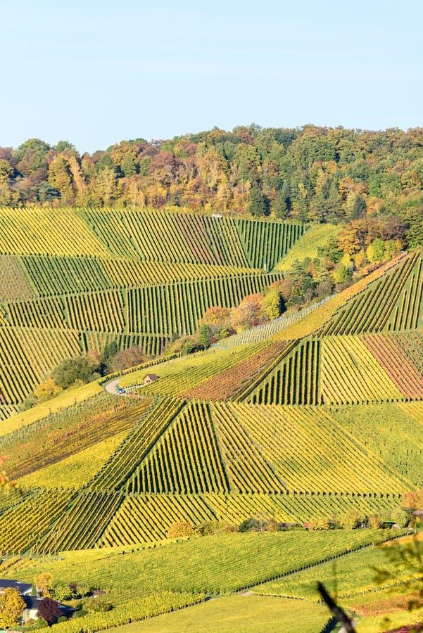 Winnicy przy Stuttgart - pi?kny wino region w po?udnie Niemcy obrazy royalty free