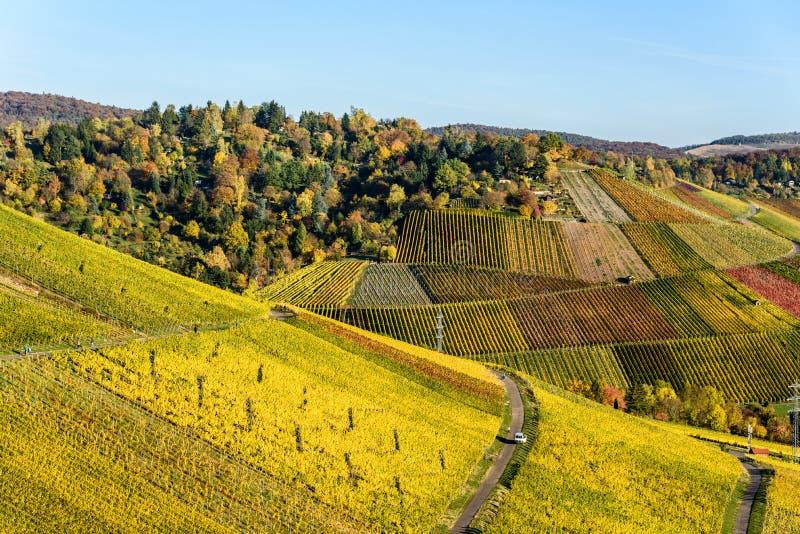 Winnicy przy Stuttgart - pi?kny wino region w po?udnie Niemcy zdjęcia royalty free