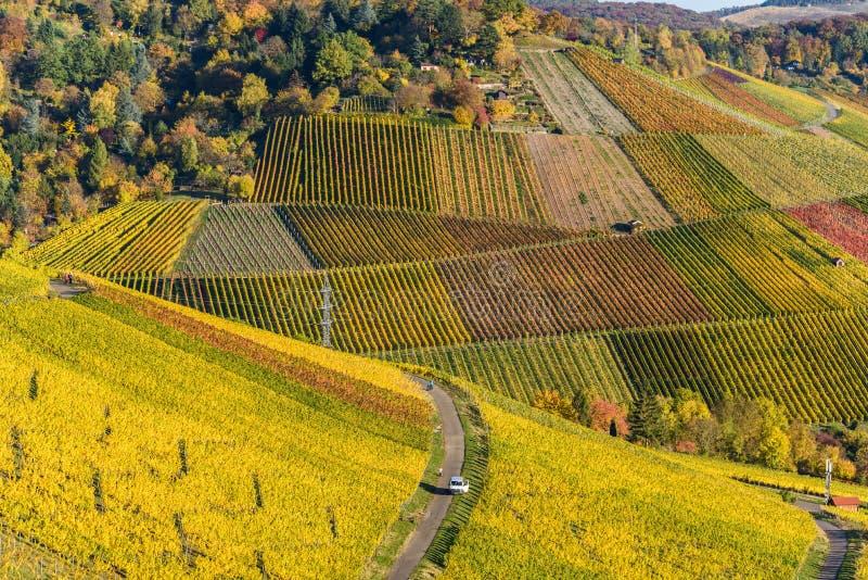 Winnicy przy Stuttgart - pi?kny wino region w po?udnie Niemcy fotografia royalty free