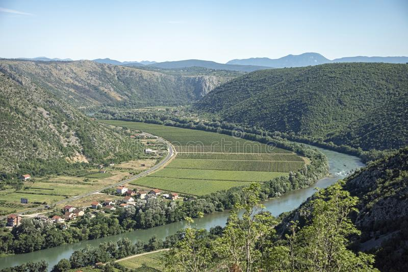 Winnicy rozciągają tak daleko jak oko może widzieć w krasowym bastionie Herzegovina w Bośnia i Herzegovina obrazy royalty free