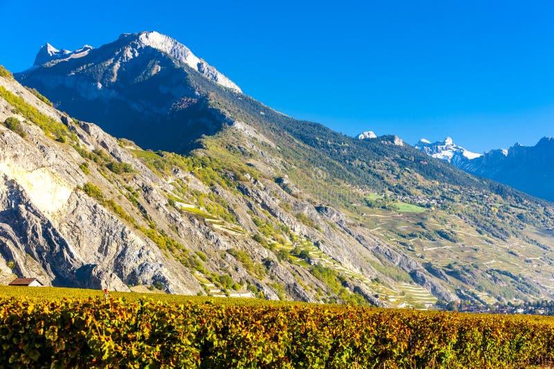 Winnicy w Ardon regionie, kanton Valais, Szwajcaria obrazy stock
