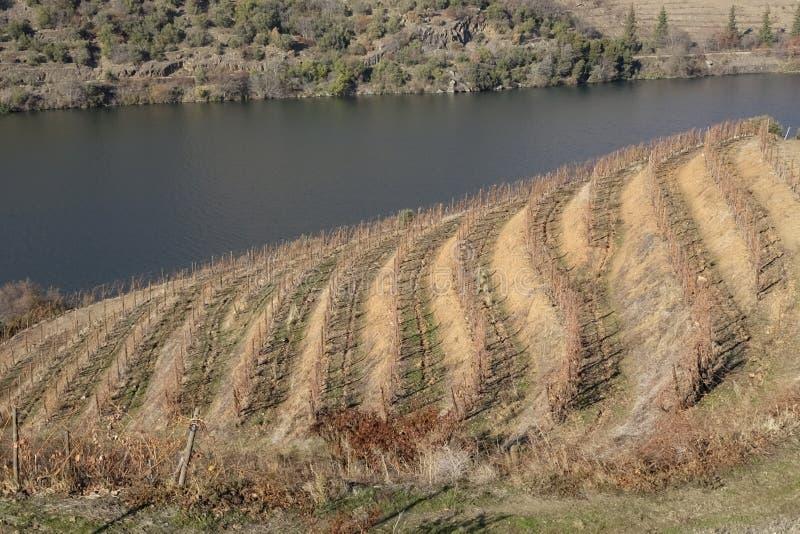 Download Winnicy w Douro dolinie zdjęcie stock. Obraz złożonej z dziedzictwo - 106908784