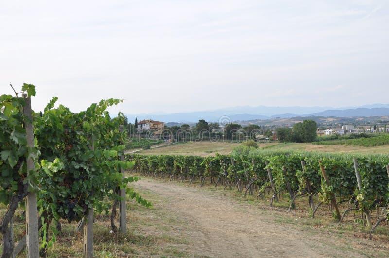 Winnicy w Florencja Tuscany Italy obrazy royalty free