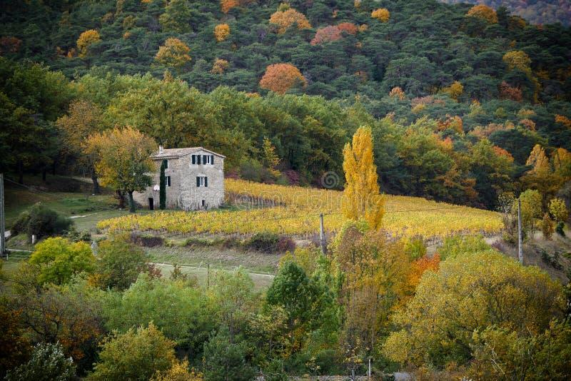 Winnicy w francuskiej wsi, Drome, Clairette De Umierający obraz royalty free