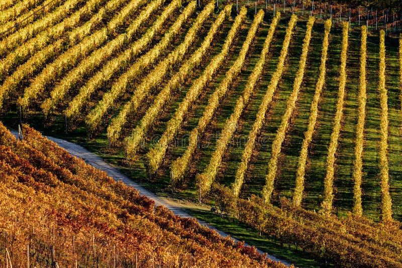 Winnicy w langhe regionie północny Italy w jesieni z pełnym obraz stock