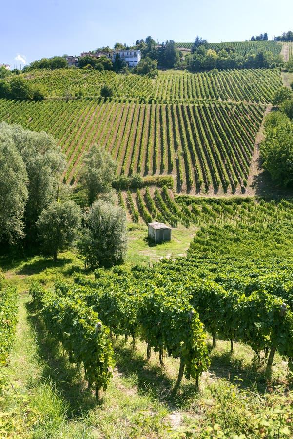 Winnicy w Oltrepo Pavese (Włochy) zdjęcie stock
