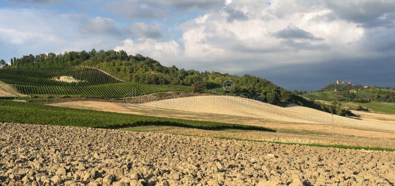 Winnicy w Oltrepo Pavese (Włochy) zdjęcia royalty free