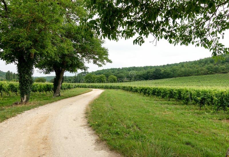 Winnicy w południe za zachód od Francja w Le Udział ` s regionie obraz royalty free