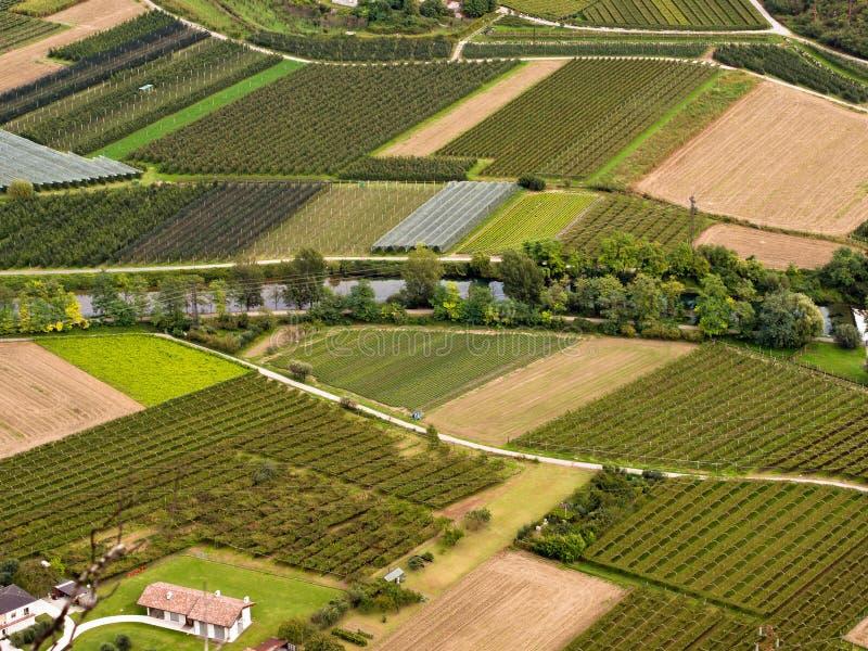 Winnicy w Włochy zdjęcie royalty free