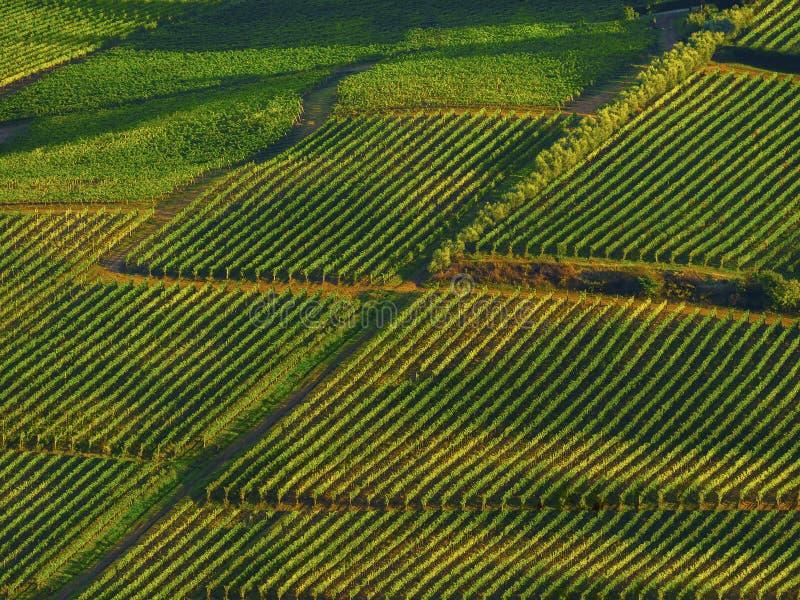 Winnicy w Włochy zdjęcie stock