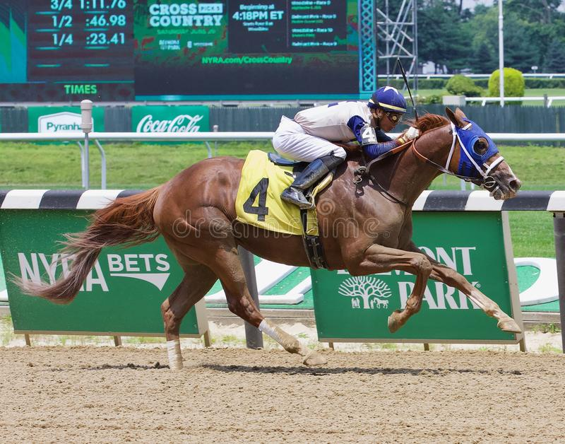 Winning Racehorses from Belmont Park stock image
