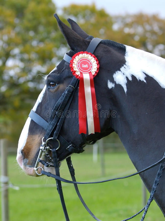 Winning Show Horse royalty free stock photos