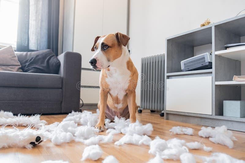Winny pies i zniszczony miś w domu zdjęcie stock