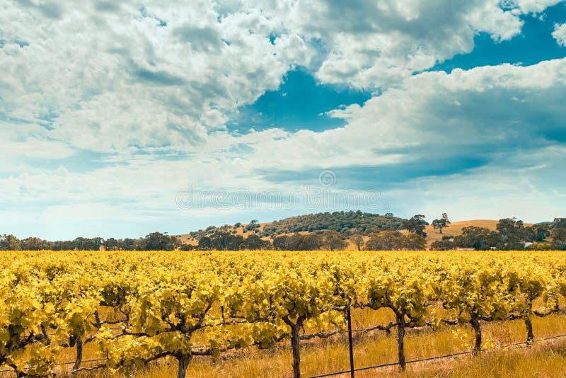 Wino dolina w Barossa, Południowy Australia fotografia royalty free