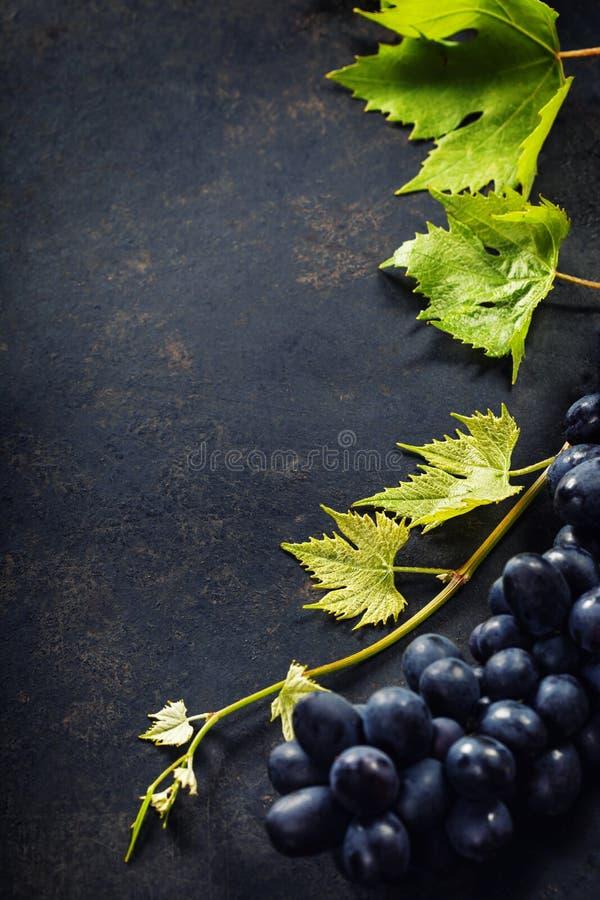 Wino i winogrono zdjęcie stock