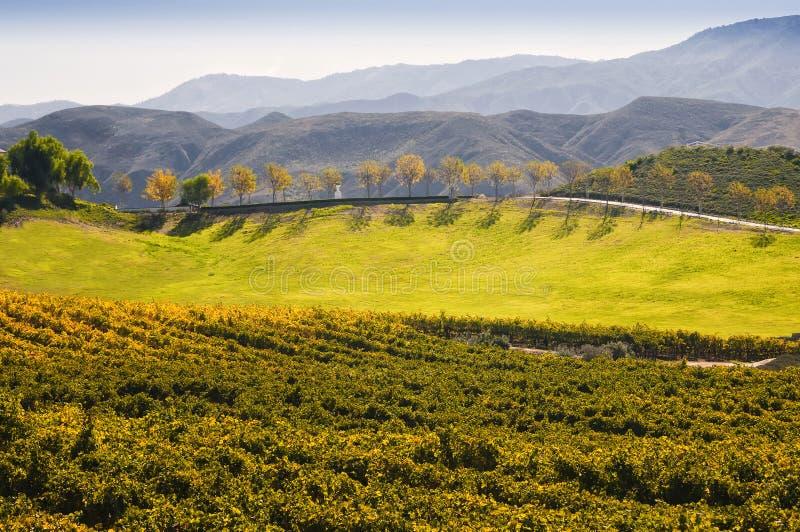 Wino kraj, Temecula, Południowy Kalifornia
