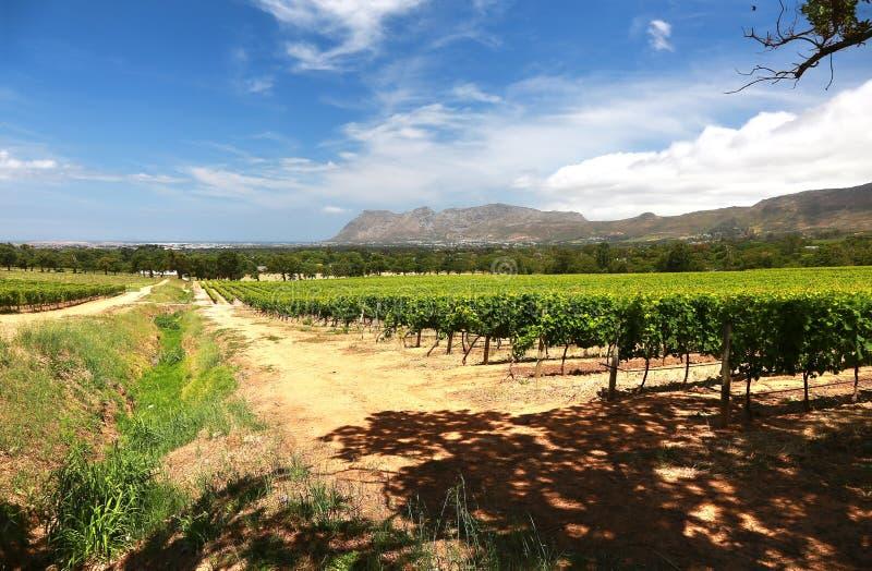 Wino Uprawia ziemię w przylądka miasteczku, południowy Africa obraz stock