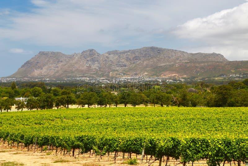 Wino Uprawia ziemię w przylądka miasteczku, południowy Africa fotografia royalty free