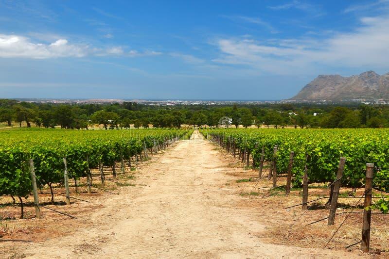 Wino Uprawia ziemię w przylądka miasteczku, południowy Africa obrazy royalty free