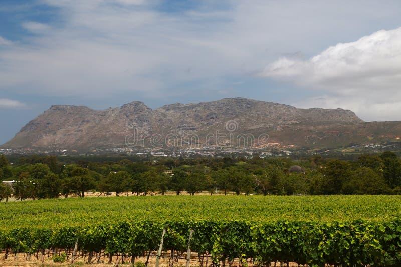 Wino Uprawia ziemię w przylądka miasteczku, południowy Africa fotografia stock
