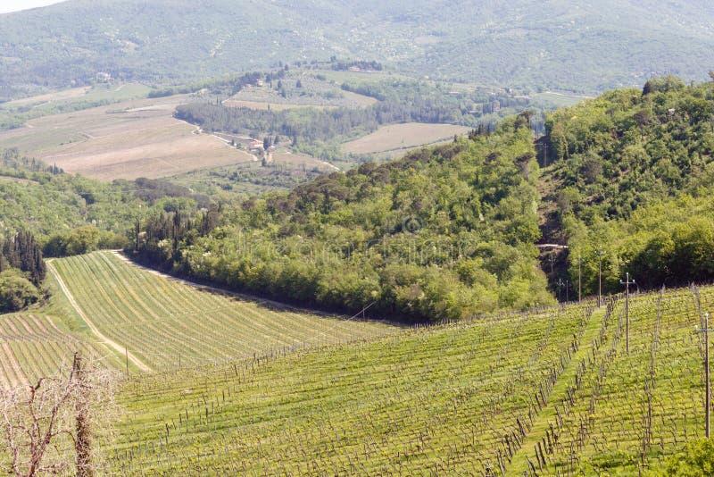 Wino winnica w zielonej dolinie w Chianti regionie Tuscany, Włochy fotografia stock