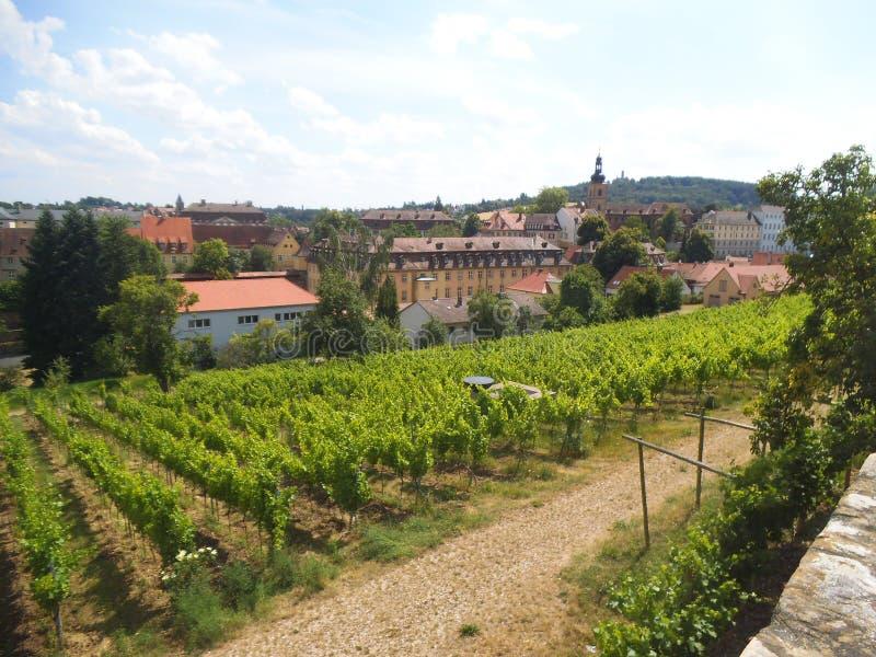 Winogradów jardy na wzgórzu w Bamberg zdjęcie royalty free