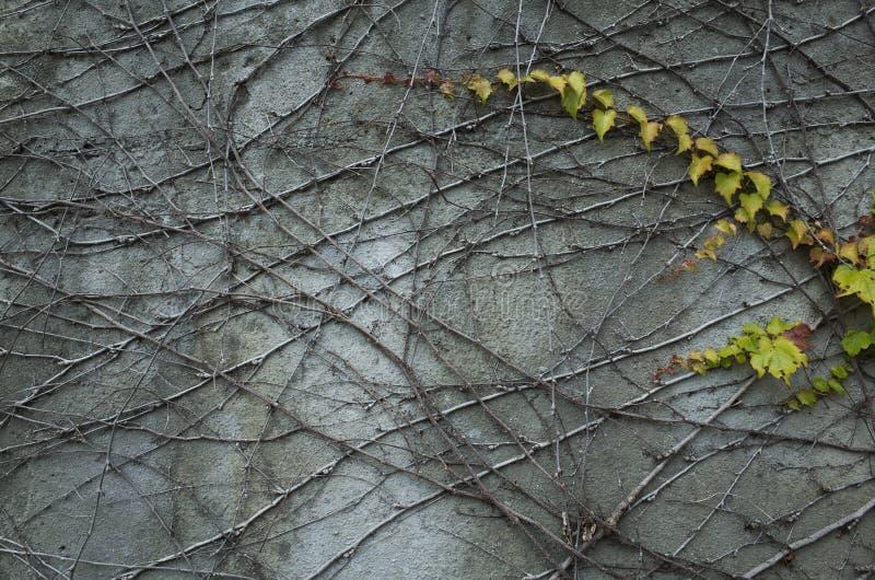 Winograd na ścianie obraz royalty free