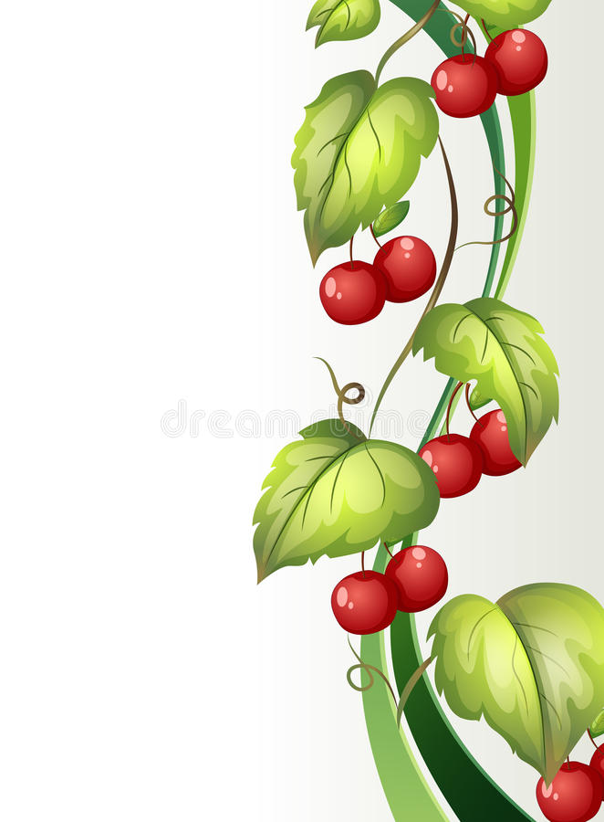 Winograd roślina z owoc royalty ilustracja