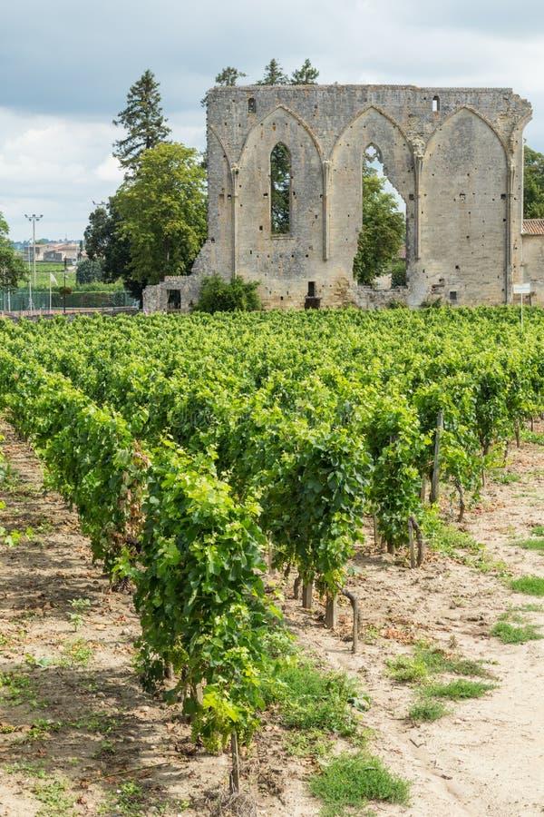 Winogrady i ruiny w St Emilion obrazy royalty free