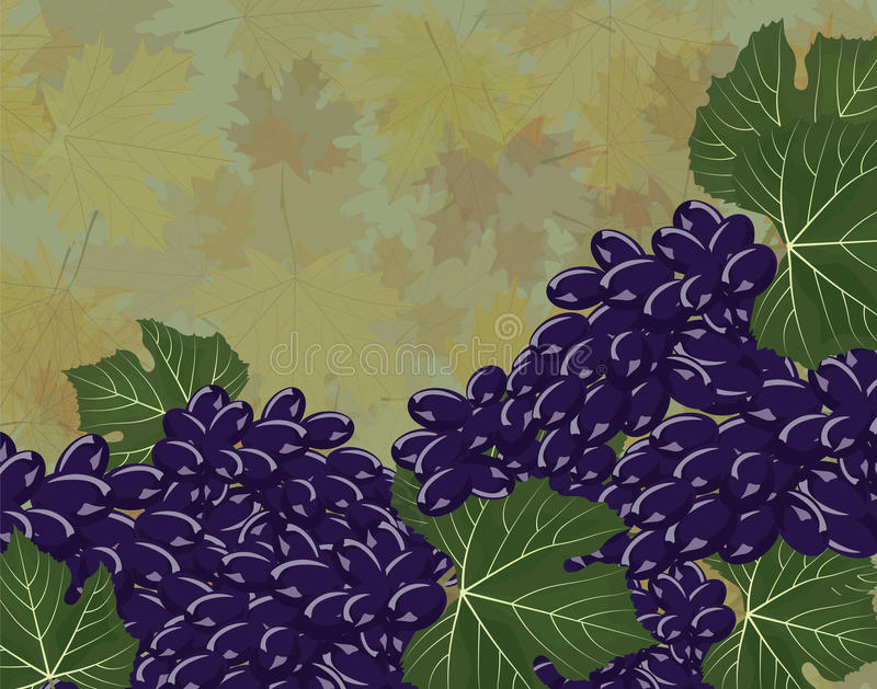 Winogron gron tło ilustracji