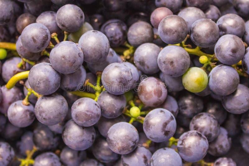 Winogrona dzicy winogrona zdjęcie royalty free