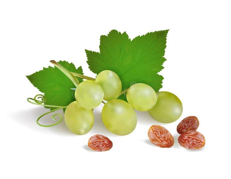 Winogrona i rodzynki na białym tle ilustracji