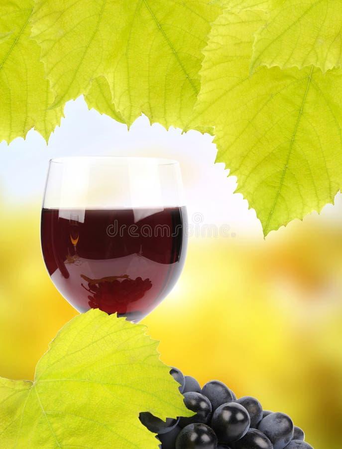 Download Winogrona i szkło wino zdjęcie stock. Obraz złożonej z przeciwutleniacz - 27352756