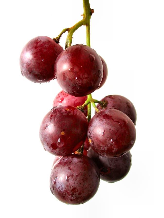 winogrona odizolowane kiści obraz royalty free