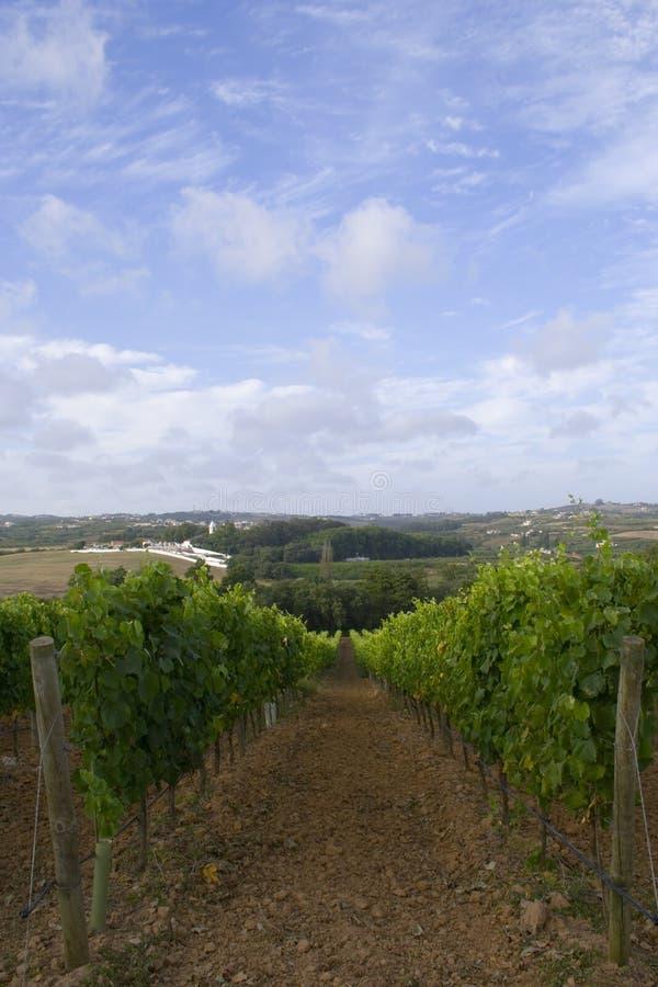 winogrona pola wina obrazy stock
