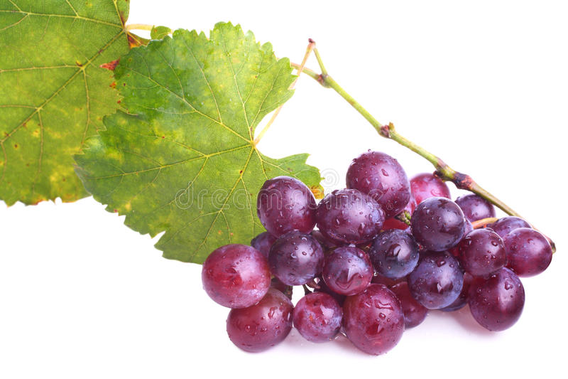 winogrona purpurowi zdjęcie royalty free