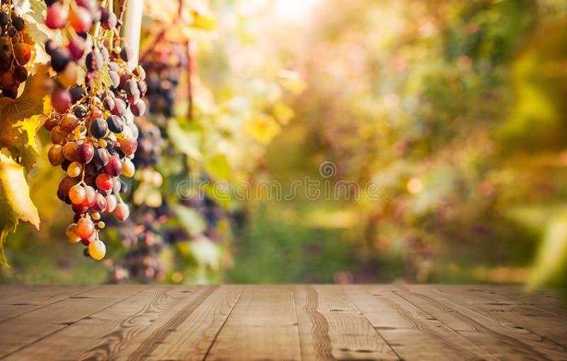 Winogrona w winnicy z pustym stołem zdjęcia stock
